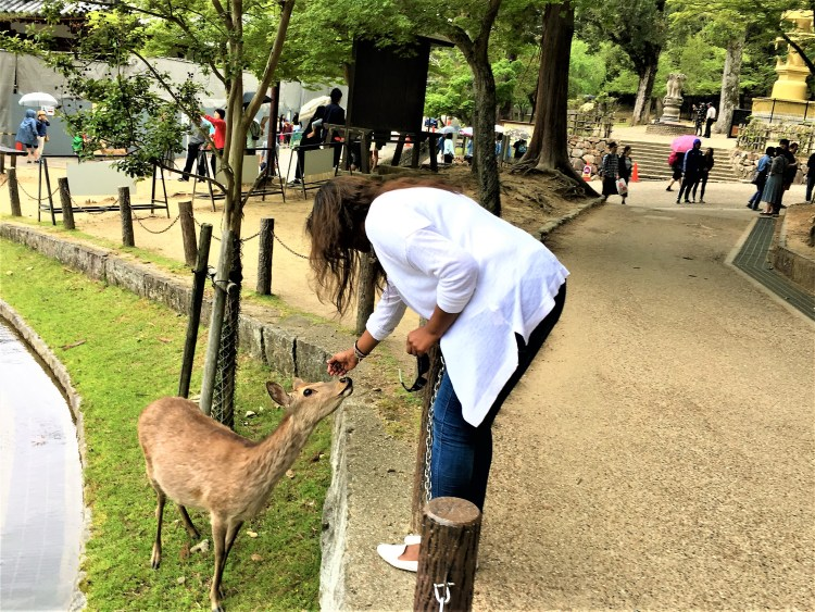 The deer in Nara Park are tame and people friendly. You can pat them, feed them and there's nothing to worry about.