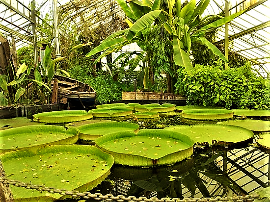 Ventnor Botanic Garden | Isle of Wight and the Victorian Love Affair