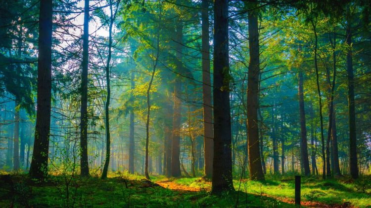 Amsterdam.Bos.forest.responsible tourism