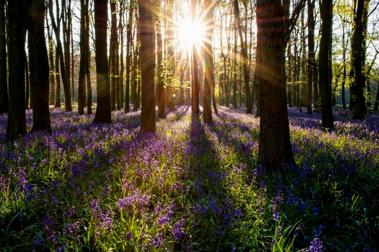 bluebell forest dorset best of England