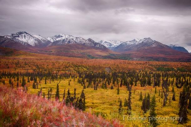 Alaska, autumn, foliage, Glenn Highway
