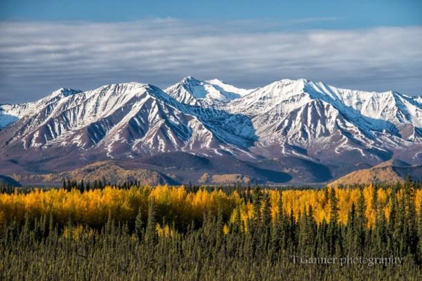 Alaska, autumn, Alaska autumn,, foliage, Alaskan Highway, Alcan Highway, Kluane, Yukon