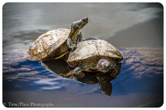 2011-06-18-0233-Courtney-Chapman-and-Robert-Pomeroy
