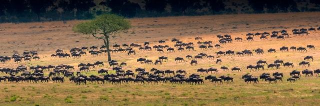 Klimaschutz Serengeti
