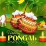 Happy Pongal 2019 Images Quotes Wishes Messages Whatsapp