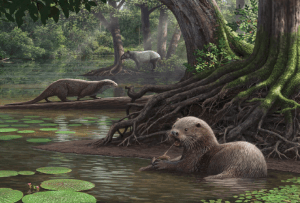This is an artist's (Mauricio Antón) reconstruction of a habitat that would have contained this large otter and some similar animals and plants for the time period. This is Figure 12 in the paper.