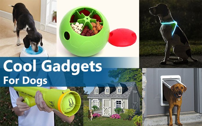 Cool gadgets for pets