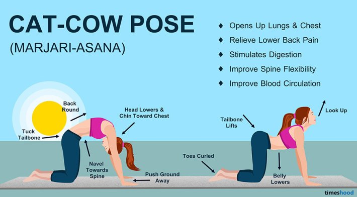 Cat and Cow Pose (Marjariasana) - Yoga for Beginners