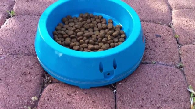 How To Prevent Ants In Cat Food