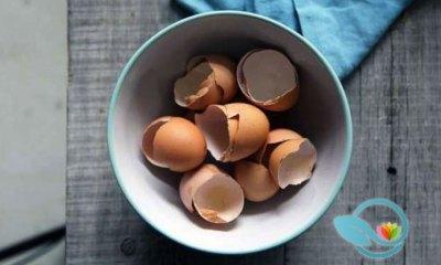 New Biomaterials Science Study: Crushed Eggshells Effective in Repairing Damaged Bone Tissues