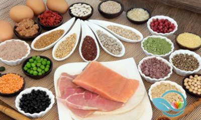 Today's Standard American Diet Focuses Heavily on Protein Intake, What Does Tomorrow Hold?