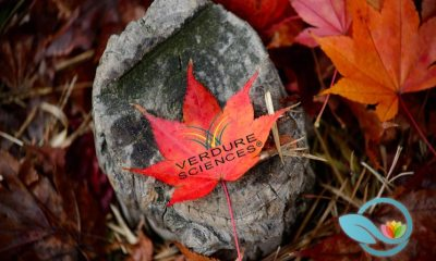 New Maplifa Red Maple Leaf Extract by Verdure Sciences Offers Sustainable Skin Health Solution