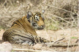 Russian team in Pench, Kanha to learn tiger conservation