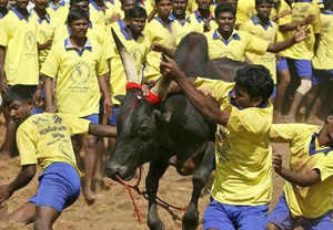 SC stands up for animal rights, bans Jallikattu