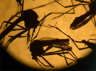 Maharashtra villages can show world how to beat Zika