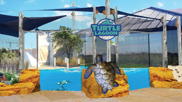 Living Coast Disovery Center Upgrading Popular Turtle
