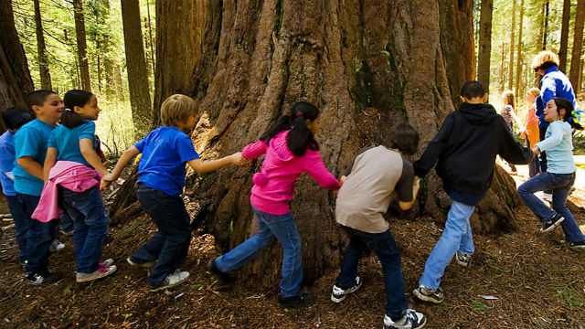 Elementary students circle a redwood tree
