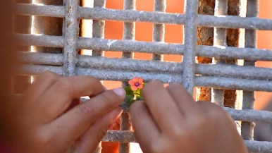 Six-year-old Kimberly, daughter of Jannet Lorenzo, passes a tiny flower through the border fence to her grandmother, Reynea Mosso, on the Mexican side. Photo by Chris Stone