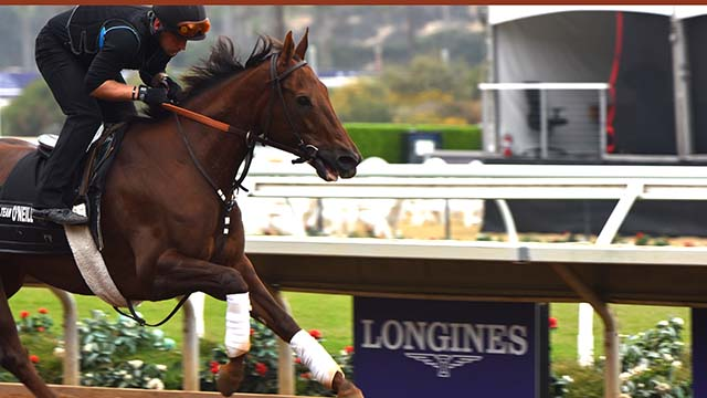 Horses are put through their paces in preparation for the Breeders Cup