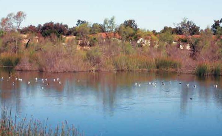 A pond at the Tijuana Valley Regional Park