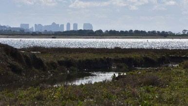 Visitors to the Kendall-Frost Mission Bay Marsh Reserve in Pacific Beach went on tours offered once a year.