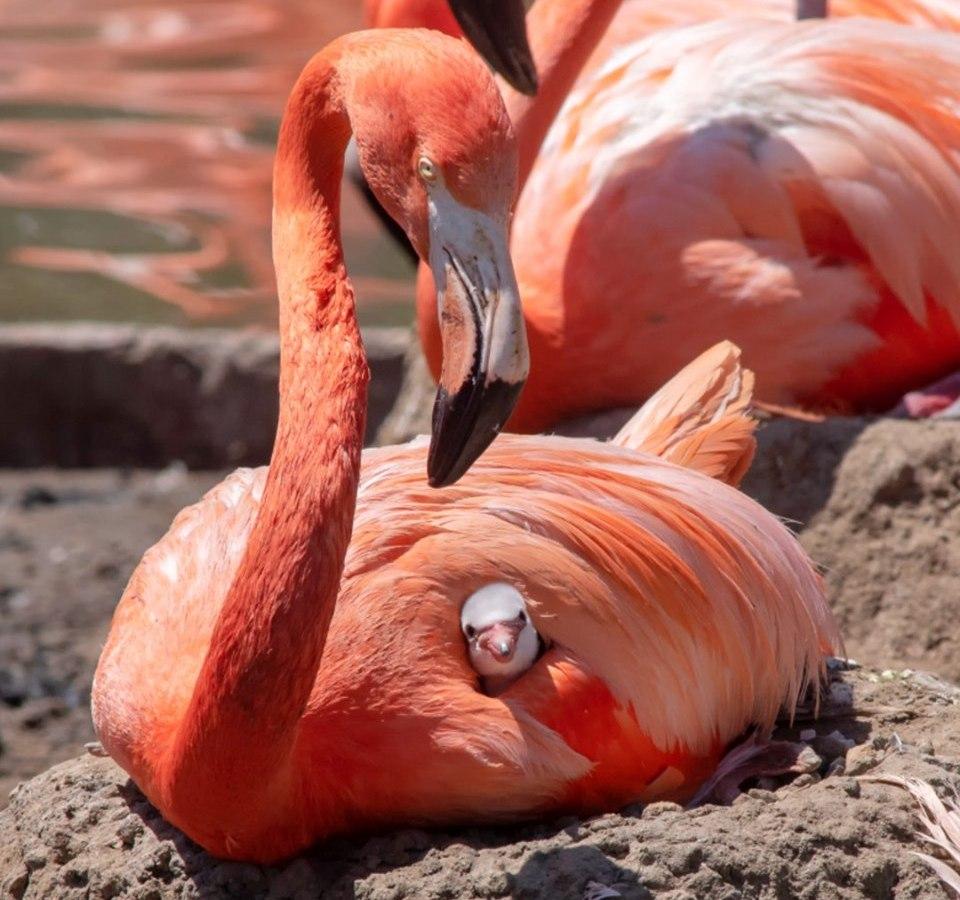 Sea World - flamingos