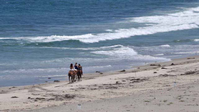 At Border Field State Park, horseback riding is allowed but not swimming or surfing for now.