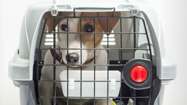 Dog ready for evacuation