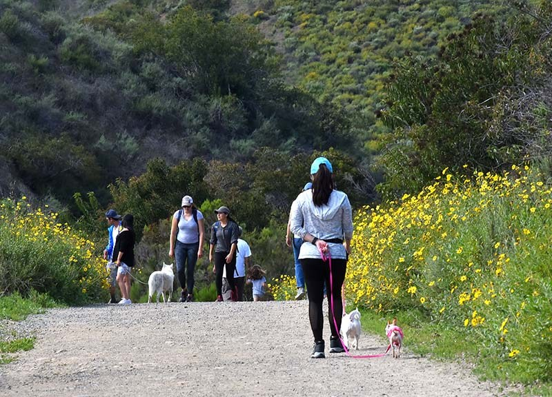 Mission Gorge Regional Park was a popular site for people to exercise amid coronavirus restrictions.