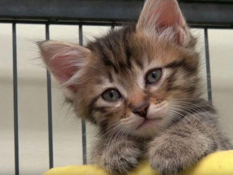 Kitten in nursery