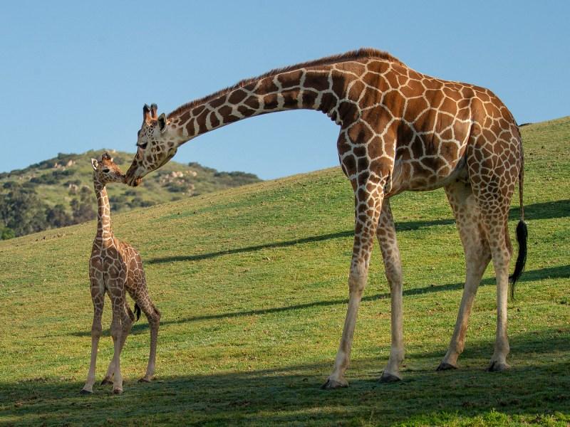 Escondido San Diego Zoo Global