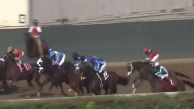 Horse stumbles during race