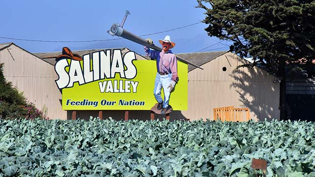 A variety of vegetables are grown in the Salinas Valley.