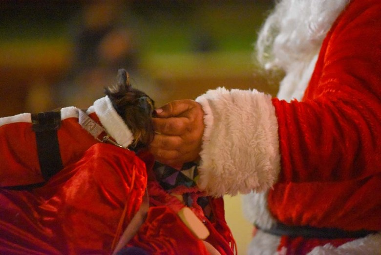 Joseph Taylor who is dressed in a Santa costume pets his chihuahua, Chica, as he raises money for oral surgery for it.
