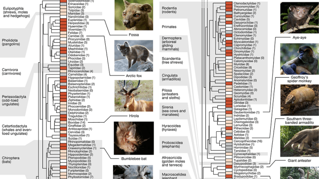 Mammalian genomes charted by team including San Diego Zoo Global.