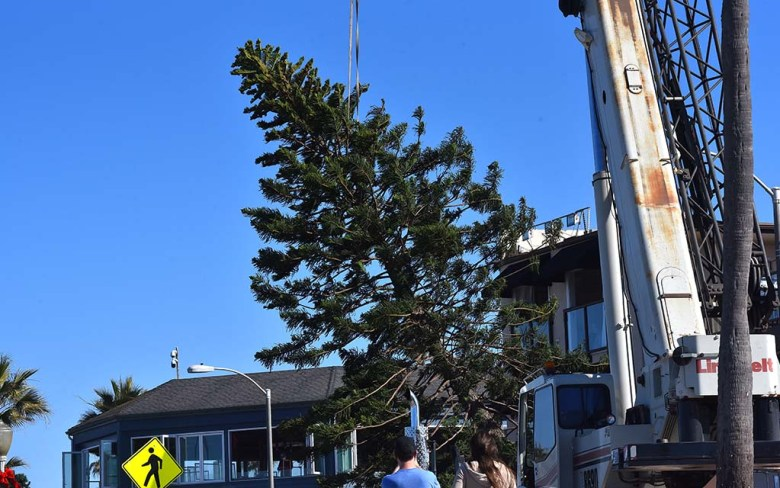 This year's Ocean Beach Christmas tree is raised off of a flat-bed truck to be placed on the beach.
