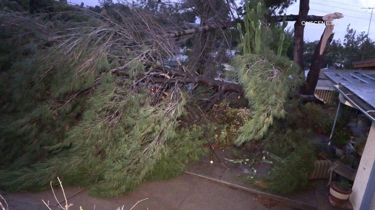 A tree down in Oak Park