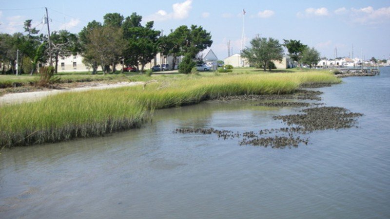 Living shoreline with oyster beds