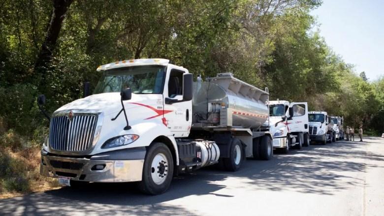 Trucks carrying salmon to the sea