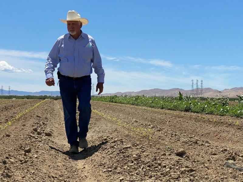Joe Del Bosque in a field