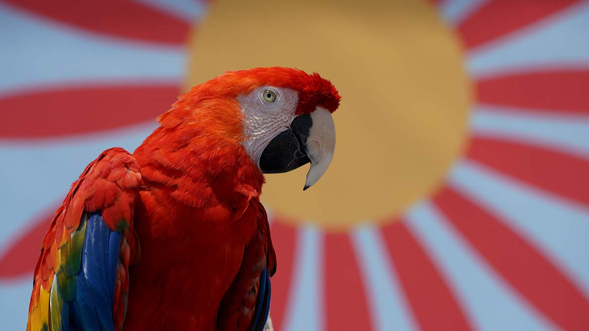 A macaw delights visitors at the animal demonstration at Home Grown Fun. Photo by Chris Stone