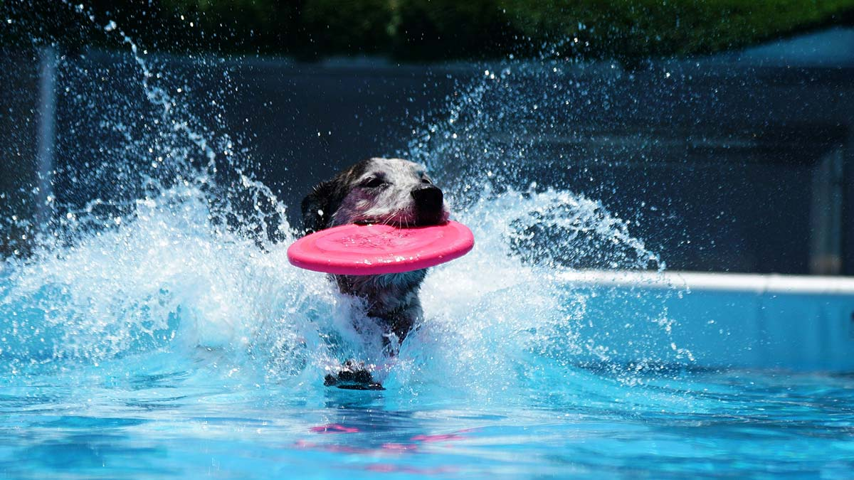 A dog catches a frisbee in midair and gets a fun cool off at the same time. Photo by Chris Stone