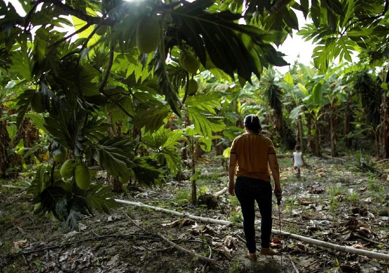 Maria on the banana plantation
