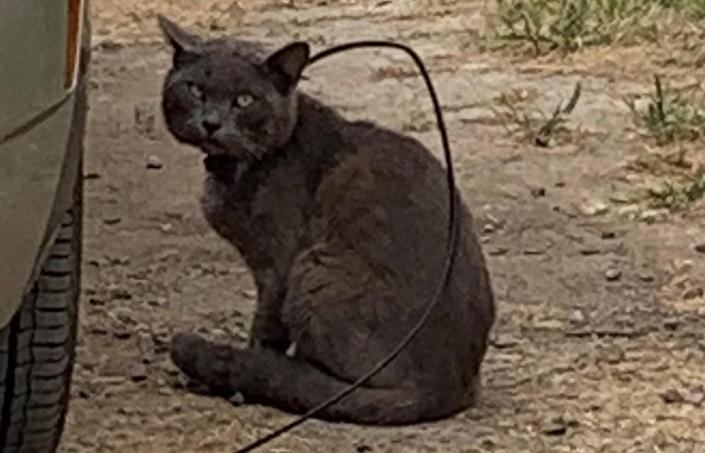 Cat with zip tie