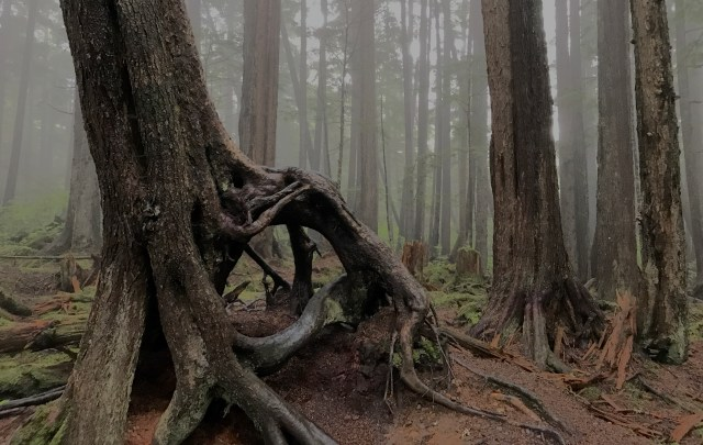 This forest in Alaska was shrouded in mist.