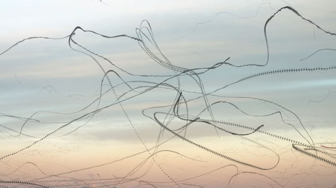 Aves en vuelo por Xavi Bou 8