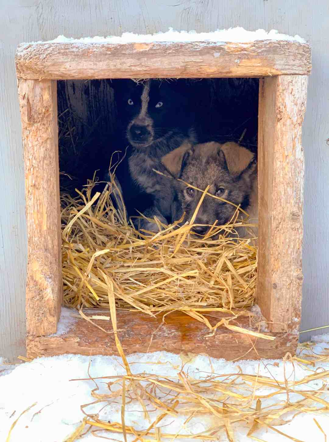 Bundling up to stay warm in their house