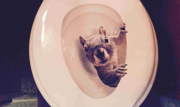 Squirrel Toilet Seat Cover Random Funny Things