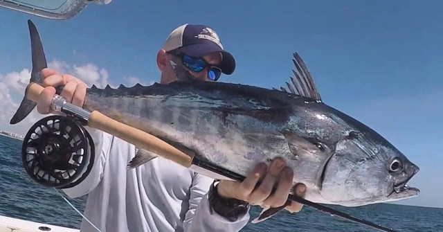 offshore albacore on the fly