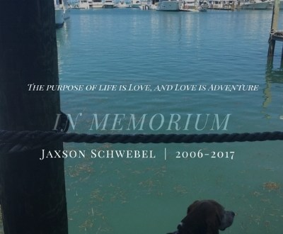 In Memorium, Jaxson the Beagle